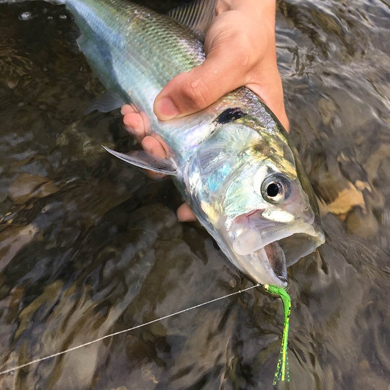 Shad Streamer - Silver & Pink alternate 21766