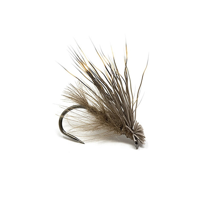 N.S. Sedge - Cdc Capriolo