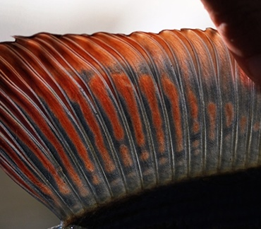 Aurina Valley Italy: Aurino river 213 fishing